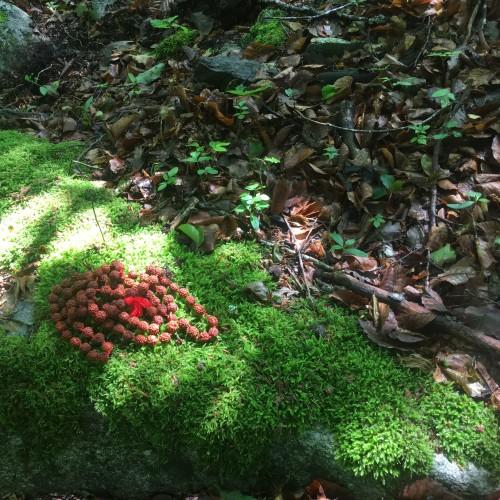 méditer dans les bois